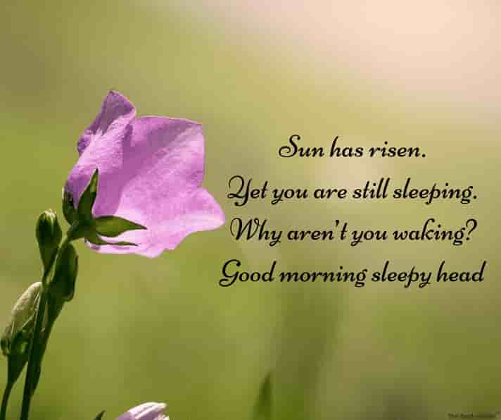 good morning sleepy head sms