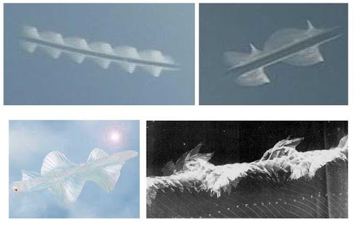 White Sky Rods Are Coming To Light Through Cameras
