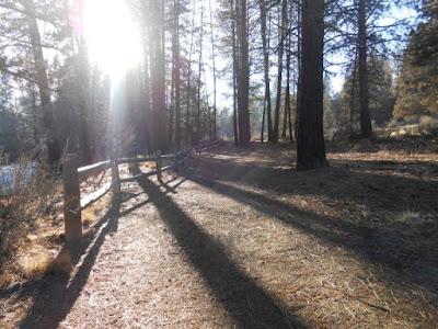 sunlight, trees, hiking trail, fence