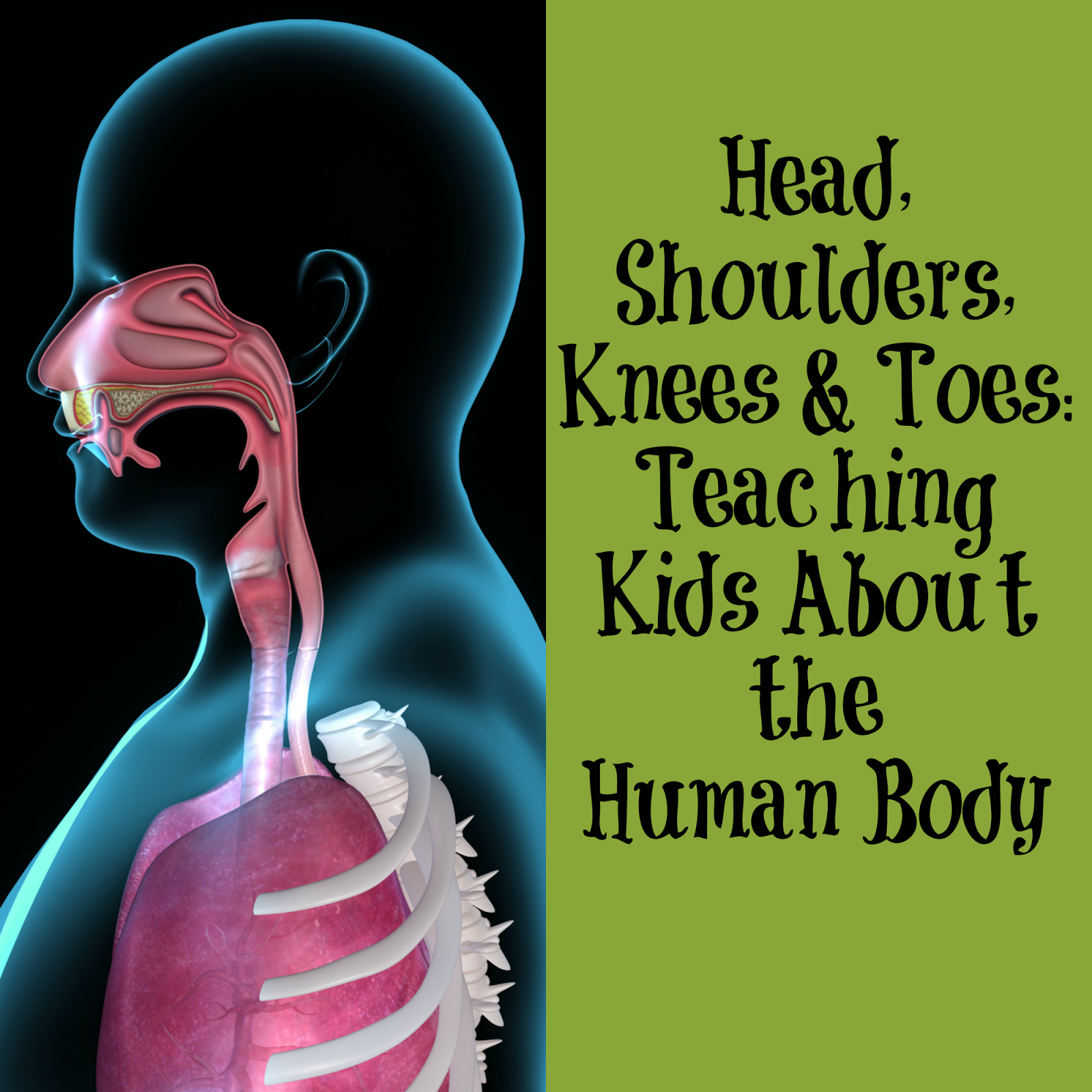 Head, Shoulders, Knees & Toes: Teaching Kids About the Human Body ...