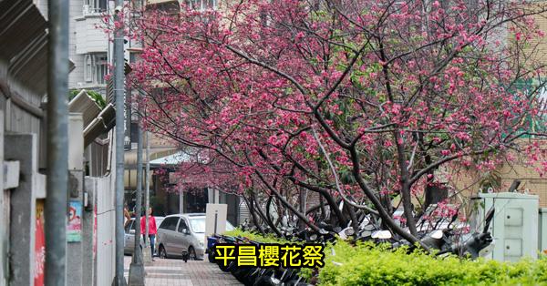 台中北屯|2019平昌櫻花祭|文昌國小旁上百公尺平昌櫻花道|週末還有音樂演奏