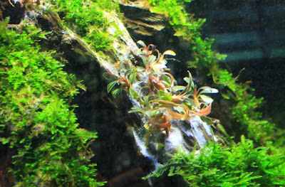 Super glue in aquarium by StrungOut from ThePlantedTank