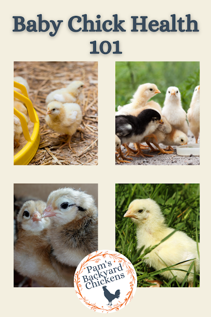 Good baby chick health early on gives your birds the building blocks they need to become healthy adults.