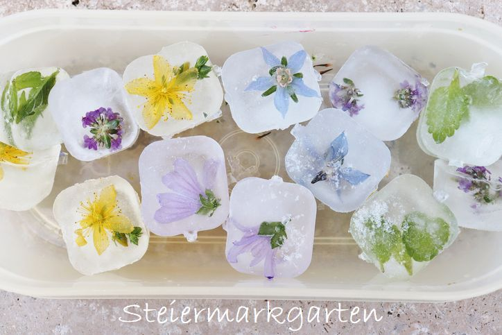 Blüten-Kräuter-Eiswürfel-Steiermarkgarten