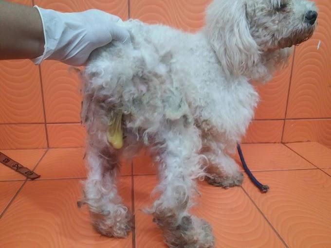 Huacho: Animalistas denuncian violación de perrito  FOTOS Y VÍDEO