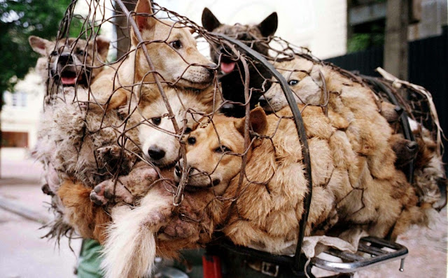 Asal-Masal-Festival-Yulin