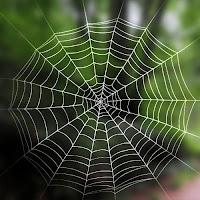 Bir örümceğin ağı