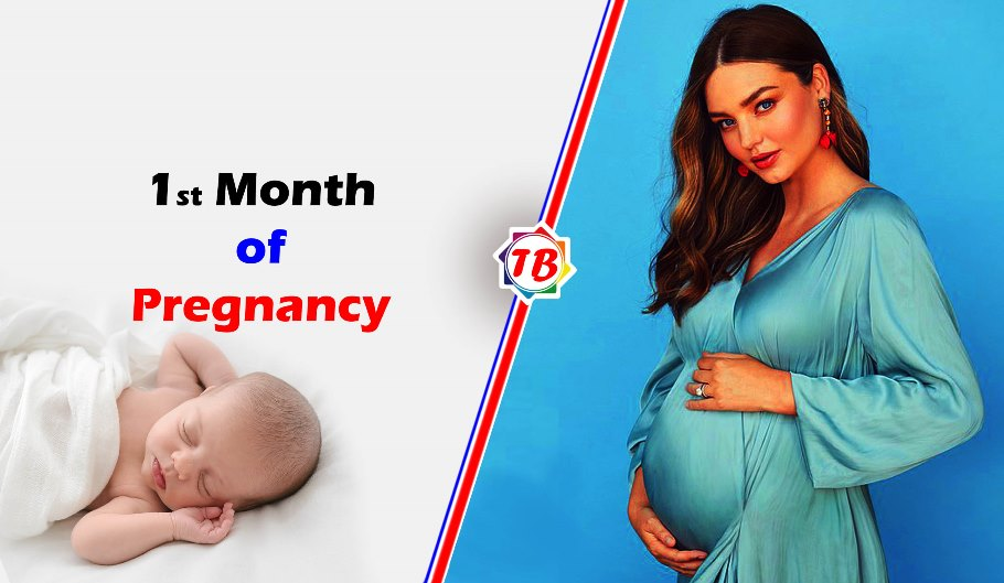 1st Month of Pregnancy