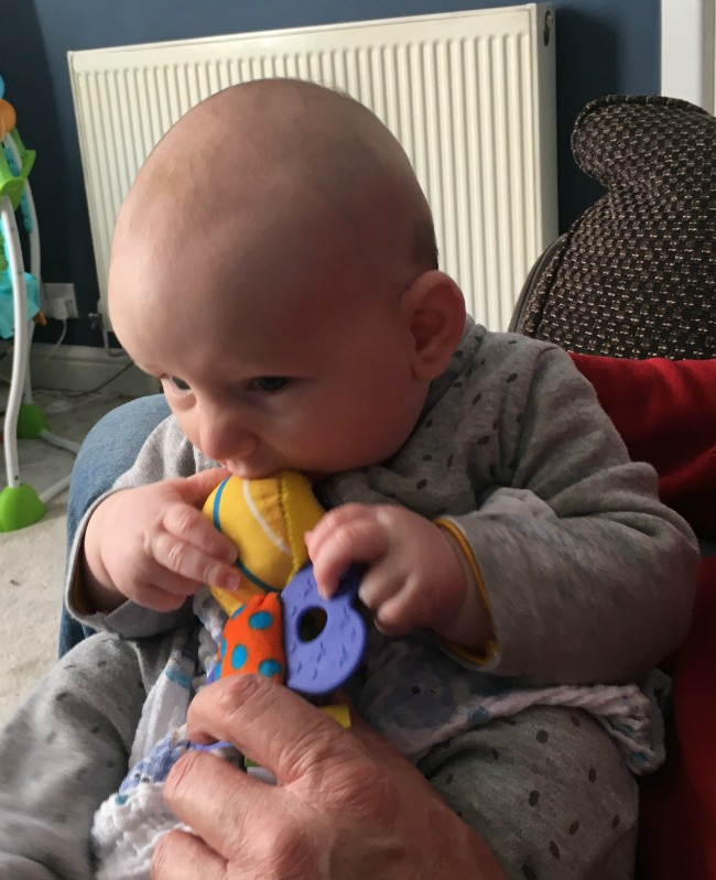 baby-successful-in-getting-small-bit-of-lamaze-toy-into-his-mouth