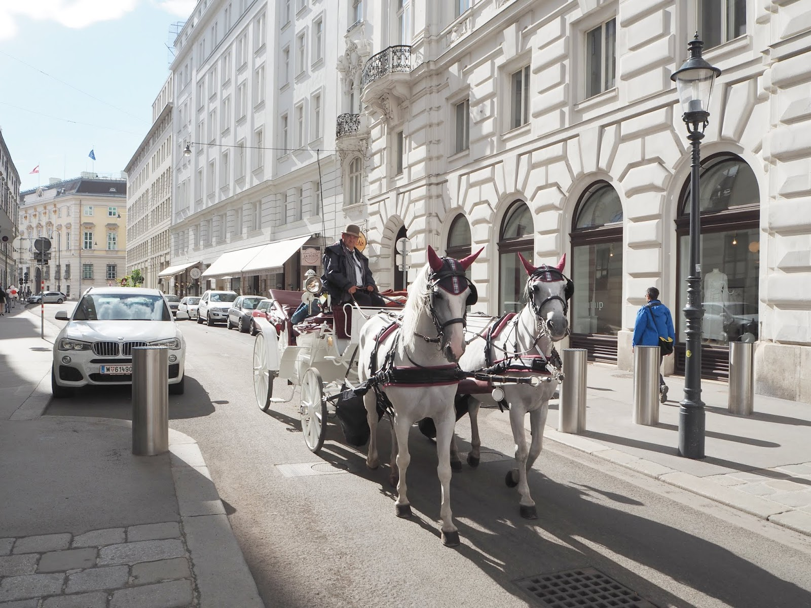 vienna city of horses