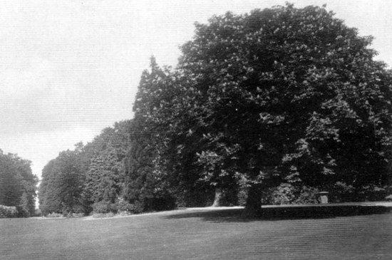 "Photograph of the ""delightful grounds with massed banks of rhododendrons"" at Leggatts taken from the 1911 auction brochure"