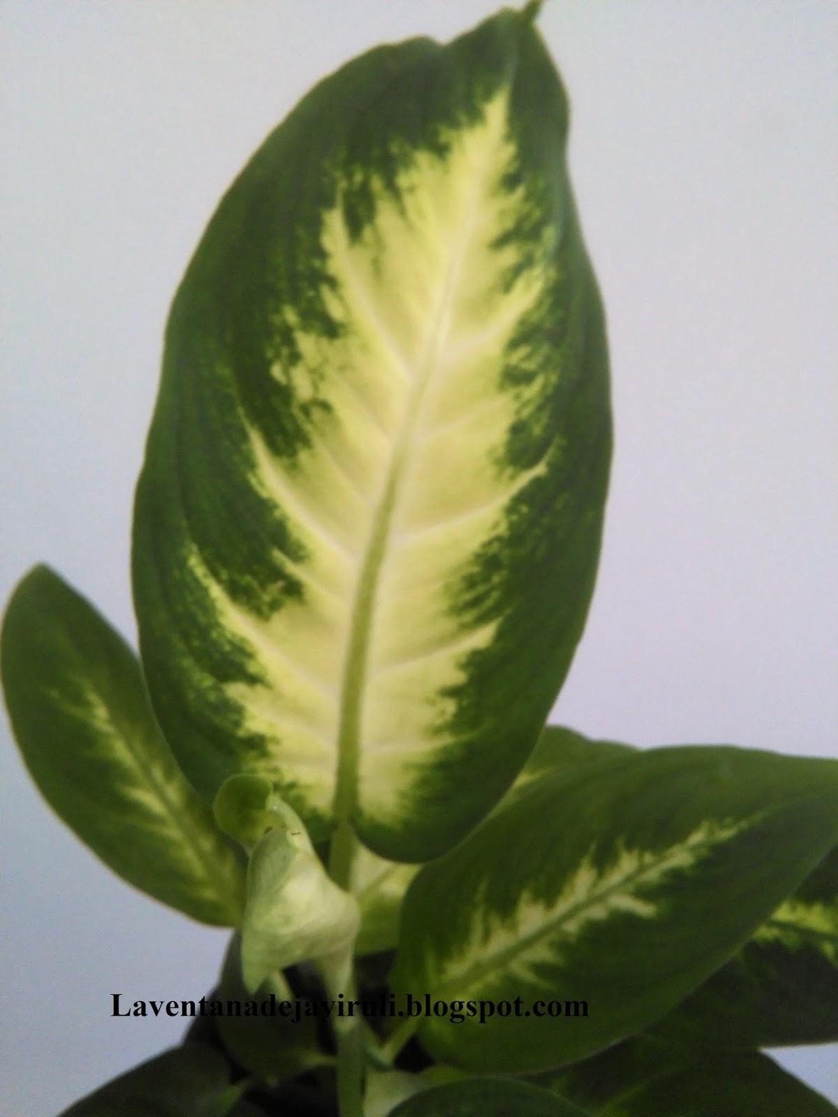 Plantas Bonitas De Interior - Plantas-bonitas-de-interior