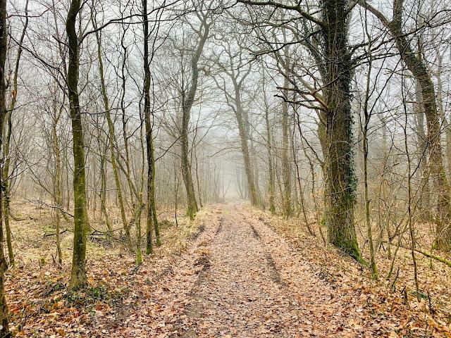 Lindeballe skov på Hede-etapen af Landsbyvandreruten