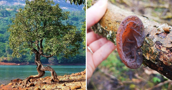 11 Times Nature Tried To Confuse Us Through Their Shocking Creativity
