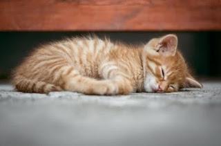 gambar kucing lucu dan imut - kanalmu