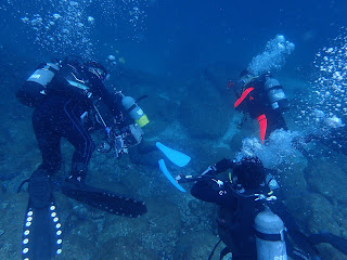 2021年9月14日の柏島ダイビング