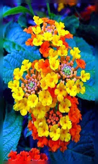 Flores naranja con amarillo fondos wallpaper para teléfono móvil resolución 480x800