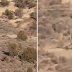 This Creature Was Just Caught On Film In The Desert And Experts Are Stumped