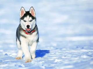 تدريب الكلاب,كلب,الكلاب,الكلب,اول تدريب للكلاب,تدريب الكلاب البيتبول,تدريب الكلب علي الحمام,كيفية تدريب الكلاب على العض,كيف تدرب كلب الهاسكي,تدريب كلاب على جميع الاوامر,تدريب كلاب على السلوك,تدريب الكلاب الجيرمن,تدريب الكلاب الصغيرة,كلاب