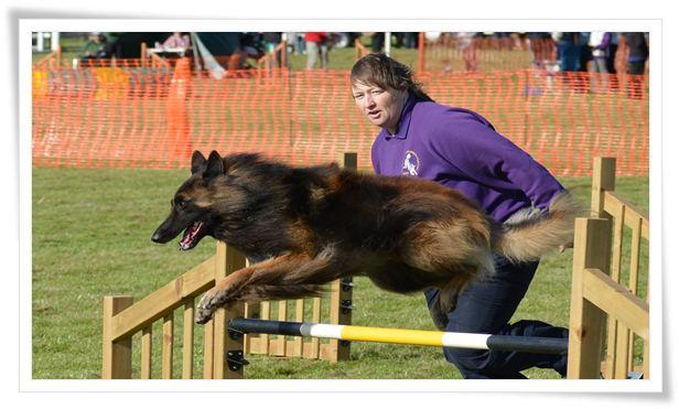 dog agility training near me