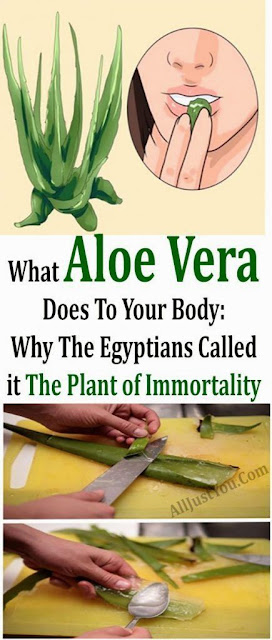 What Aloe Vera Does To Your Body: Why The Egyptians Called it The Plant of Immortality