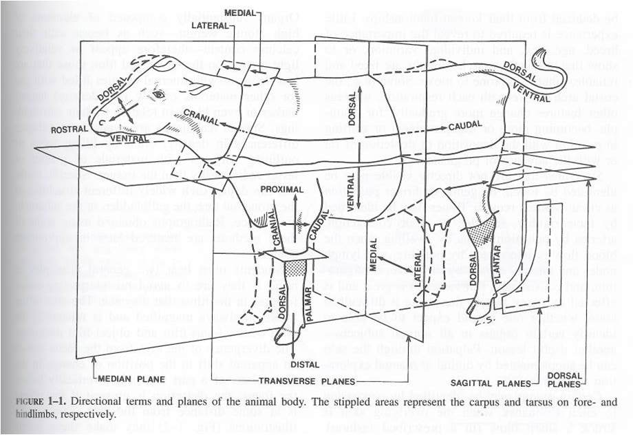 Merrily's Animal Science Journal: Notes from Veterinary