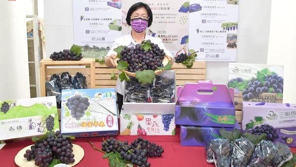 彰化優鮮葡萄促銷 王惠美:送禮自用兩相宜