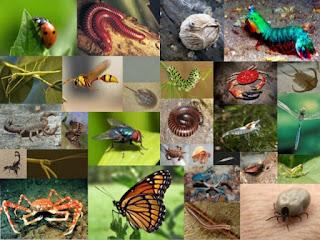 Peranan Arthropoda Yang Menguntungkan dan Merugikan Dalam Kehidupan Manusia