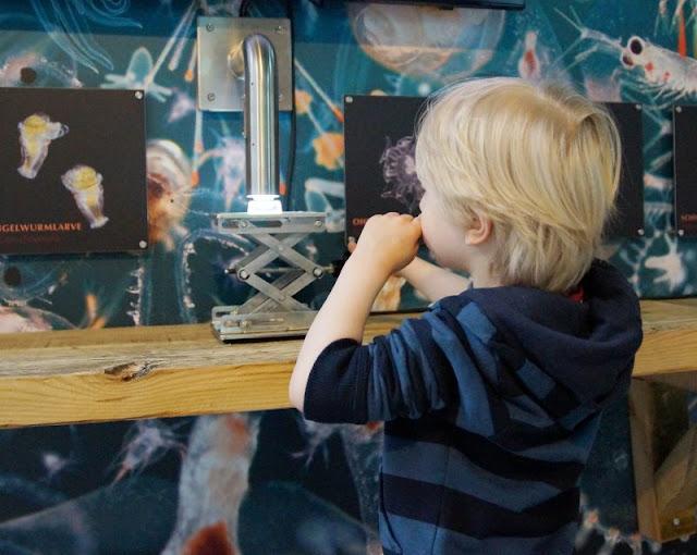 Mehr übers Meer lernen: Das Ostsee Info-Center in Eckernförde (+ Verlosung). Hier können auch Kleinkinder bereits mikroskopieren!