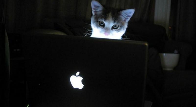 Οι γάτες δε ξεχνάνε σχεδόν ποτέ ότι μαθαίνουν – Μαθαίνουν μέσω της παρατήρησης