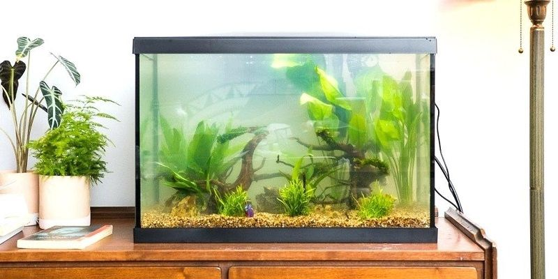 Image The Debate Over Betta Tank with Filter