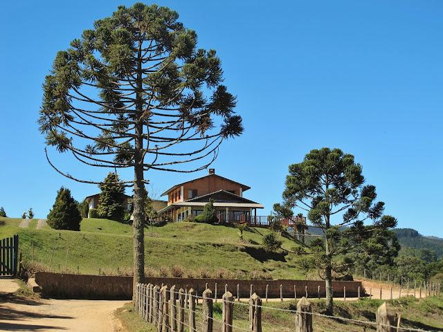 Araucárias em Monte Verde