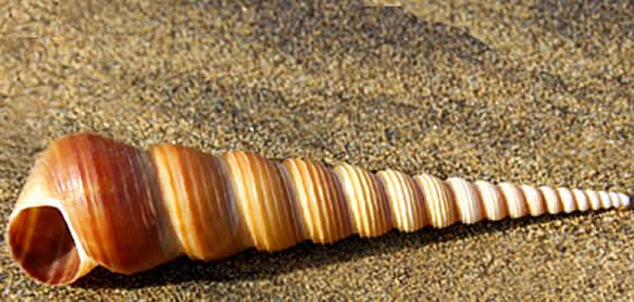Sam Wood: Organic Forms - Shells