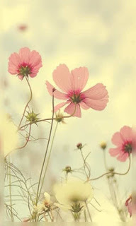 Flores pálido rosa fondos wallpaper para teléfono móvil resolución 480x800