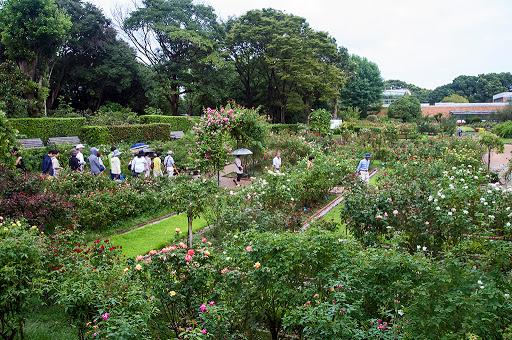 福岡市植物園バラ園