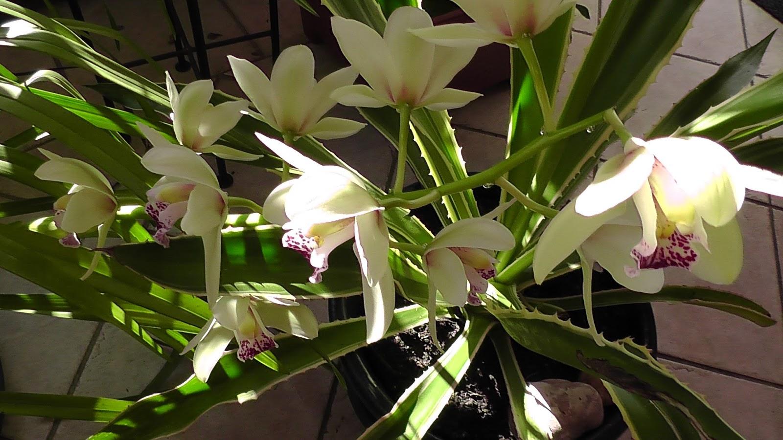 julchens welt orchidee erwacht aus dem winterschlaf. Black Bedroom Furniture Sets. Home Design Ideas