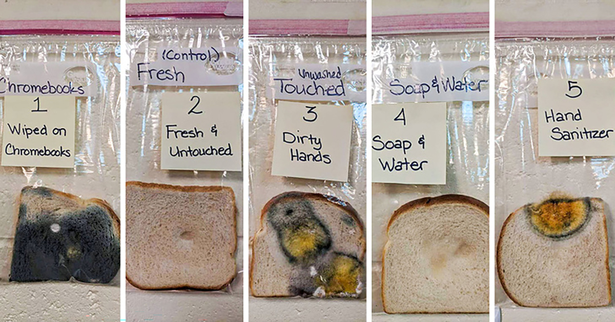 Experiment, Hand washing, Bread