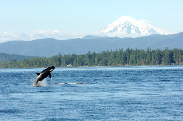 The Olympic National Forest and Mt. Olympus from Puget Sound
