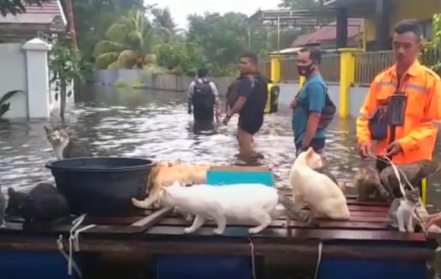 Pria Ini Selamatkan Puluhan Kucing Saat Banjir: Kami Bawa Juga ke Pengungsian