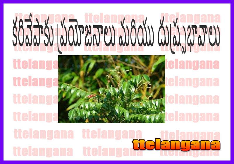 కరివేపాకు ప్రయోజనాలు మరియు దుష్ప్రభావాలు
