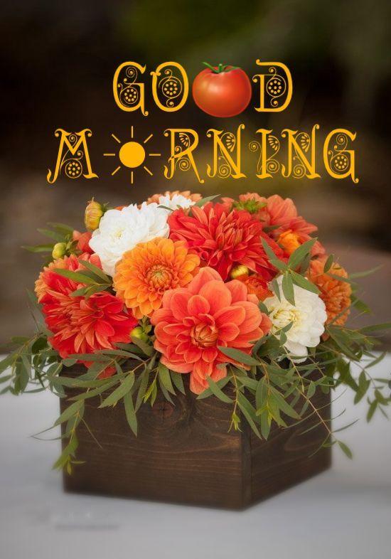 beautiful orange flower with good morning wishes