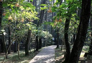 http://www.teluklove.com/2017/03/pesona-keindahan-wisata-taman-hutan.html