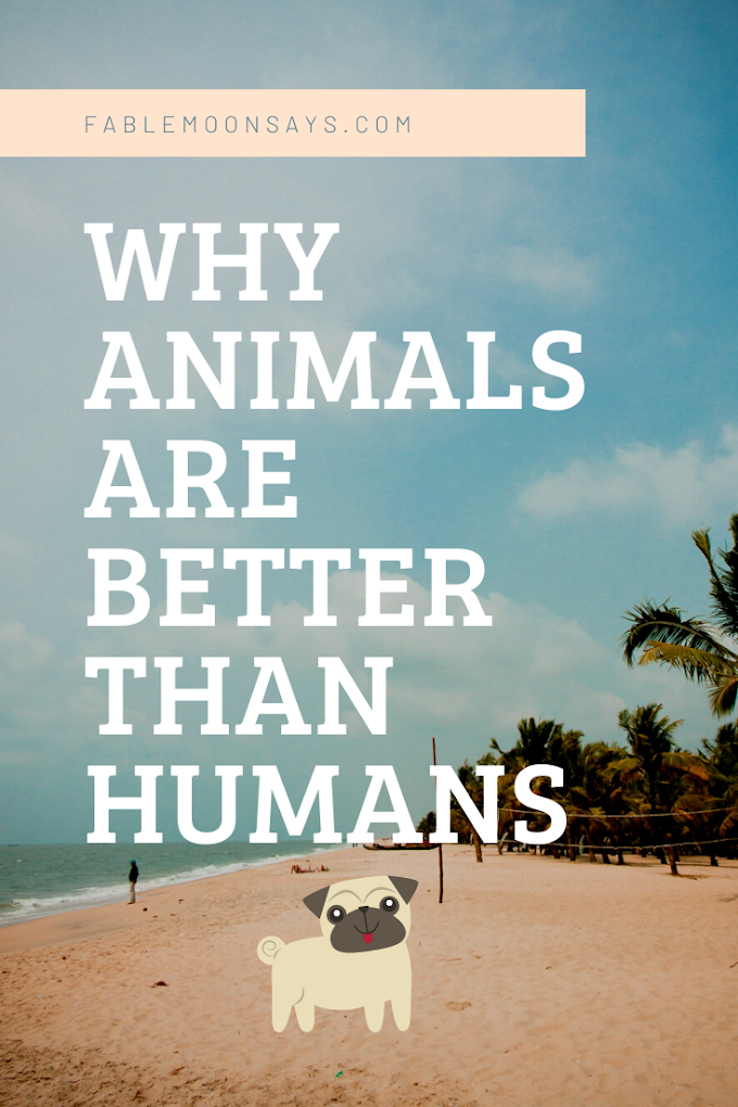 Why Animals are Better than Humans