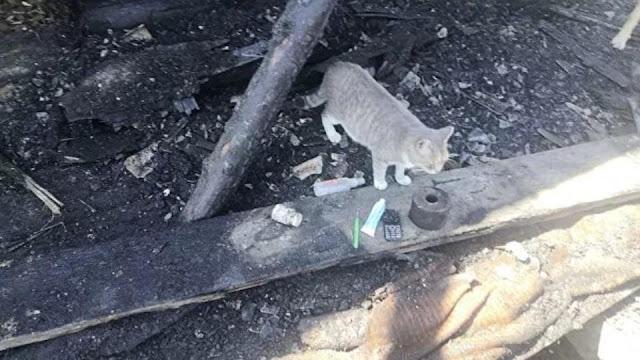 Жители загоревшегося дома выжили благодаря кошке!!!