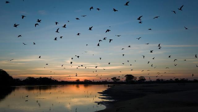 anoitecer no Pantanal
