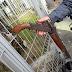 Bandidos tem assalto frustrado pela  PM e são baleados durante troca de tiro