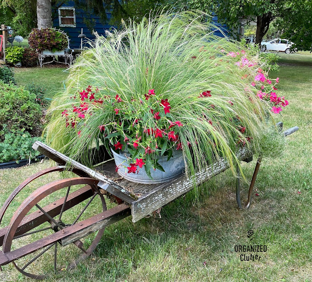 Photo of a rustic wheelbarrow planting in August