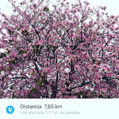 árbol-en-flor