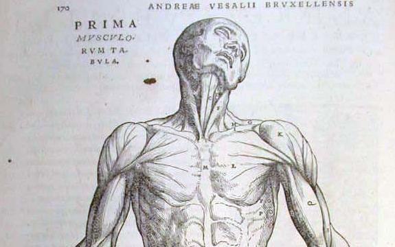 La Mitocondria: Nuestros tejidos III: Tejido muscular