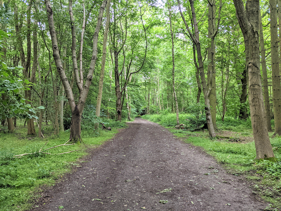 The permissive path heading through Rothamsted Manor woodland